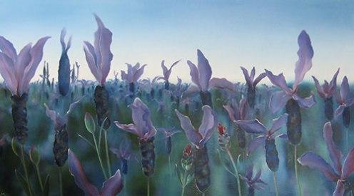 lavender-fieldw